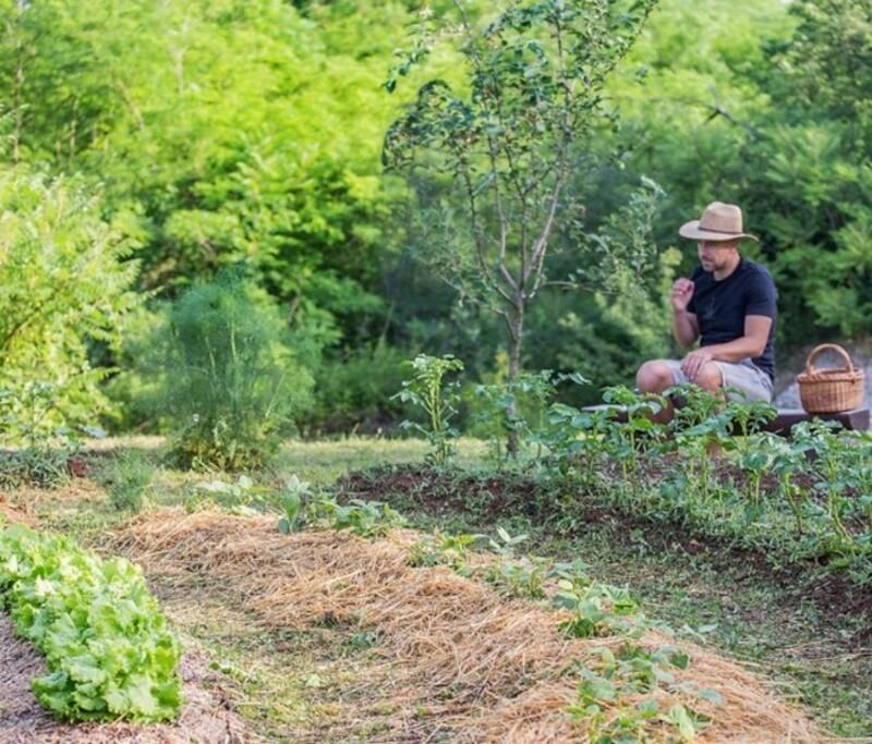 Les bases pour apprendre à développer son jardin en permaculture!