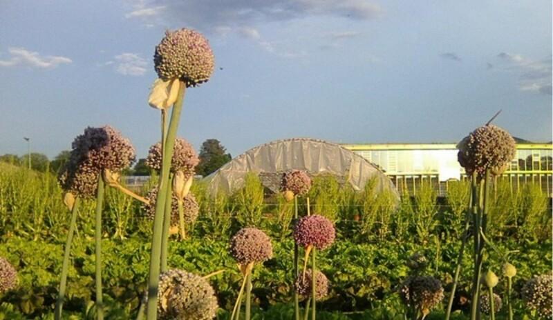 Venez visiter et découvrir une production de semences locales et biologiques, entre le Salève et le Jura
