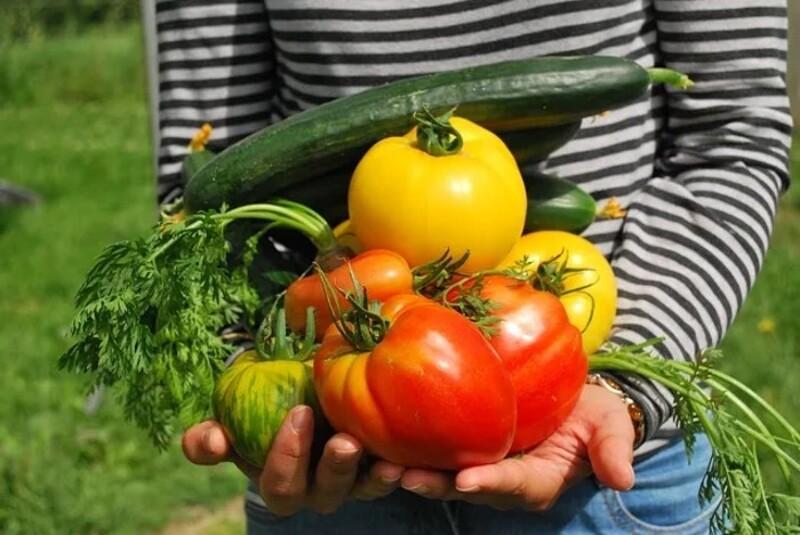 Ce cours s'adresse à toutes les personnes qui ont envie de cultiver un petit bout de terre – que ce soit dans une plate-bande, un pot, un jardin ou sur un balcon – en travaillant avec la nature